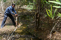EGYPT, Ismallia , Sarapium forest in the desert, the trees are irrigated by treated sewage water from Ismalia / AEGYPTEN, Ismailia, Sarapium Forstprojekt in der Wueste, die Baeume werden mit geklaertem Abwasser der Stadt Ismalia bewaessert