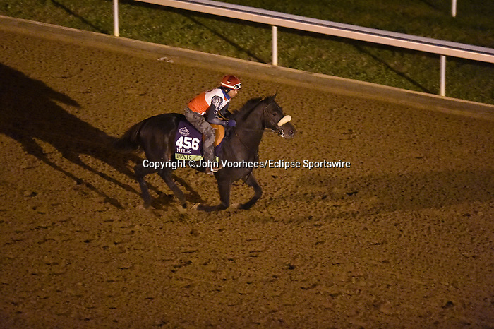 November 5, 2020: Ivar, trained by trainer Paulo H. Lobo, exercises in preparation for the Breeders' Cup Mile at Keeneland Racetrack in Lexington, Kentucky on November 5, 2020. John Voorhees/Eclipse Sportswire/Breeders Cup/CSM