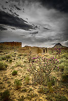 A lone cholla bears witness to the slow decay of an adobe building in the ghost town of Guadalupe, New Mexico in a remote section of the Rio Puerco Valley