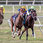 HALLANDALE BEACH, FL - MAR 31:Hi Happy (ARG) #3 trained by Todd A. Pletcher with Luis Saez in the irons vies for the lead along the final turn on the way to winning The Pan American Stakes (G2) at Gulfstream Park on March 31, 2018 in Hallandale Beach, Florida. (Photo by Bob Aaron/Eclipse Sportswire/Getty Images)
