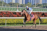 07 February 2010:  Interactif with jockey Kent Desormeaux in the Eighth race The Hallandale Beach Stakes at Gulfstream Park in Hallandale Beach, FL.