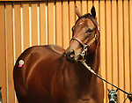 12 September 2010.  Hip #26 Bluegrass Cat - Clay's Rocket colt sold for $300,000 at the Keeneland September Yearling Sale.   Consigned by Taylor Made.