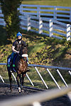 Siskin, trained by Ger Lyons, exercises in preparation for the Breeders' Cup Mile at Keeneland 11.03.20.