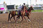 September 19, 2020: #6 Admiralty Pier, ridden by Steven Bahen and trained by Barbara Minshell heads to the post for the Grade 1 Ricoh Woodbine Mile at Woodbine Racetrack in Toronto, Ontario, Canada.