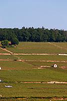 vineyard hut corton hill aloxe-corton cote de beaune burgundy france