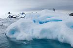 An Adelie penguin on an iceberg near Peterman Island, Antarctic Peninsula.