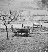Sommer auf dem Land, Deutschland 1930er Jahre. Summer in the countryside, Germany 1930s.