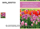 Alfredo, FLOWERS, BLUMEN, FLORES,  photos+++++,BRTOXX02733,#F#