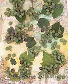 Interlitho, STILL LIFES, photos+++++,green grapes,KL16390,#I# Stilleben, naturaleza muerta