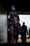 November 5, 2020: Devilwala  at Keeneland Racetrack in Lexington, Kentucky on November 5, 2020. Alex Evers/Eclipse Sportswire/Breeders Cup