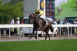 SHA TIN,HONG KONG-APRIL 24: Werther #10,ridden by Hugh Bowman,is aiming to win the Audemars Piguet QEII Cup at Sha Tin Racecourse on April 24,2016 in Sha Tin,New Territories,Hong Kong (Photo by Kaz Ishida/Eclipse Sportswire/Getty Images)