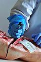 01/12/14 - AURILLAC - CANTAL - FRANCE - Entreprise Cantal Salaisons. Decoupe de la carcasse, parage et preparation du jambon - Photo Jerome CHABANNE