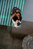 Milano, un gatto in un cortile di periferia --- Milan, a cat in a backyard in the periphery