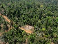 operação toruk - fevereiro de 2012 - novo repartimento/pa - áreas de desmatamento e extração ilegal de madeira - autor: paulo maués/Ibama
