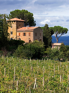 Italien, Umbrien, Weingut bei Orvieto | Italy, Umbria, wine growing estate near Orvieto