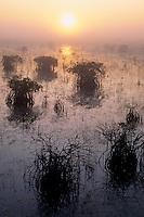 Red mangroves<br />   near Paurotis Pond<br /> Everglades National Park<br /> The Everglades,  Florida