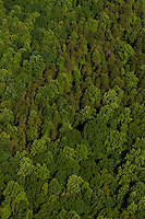 Aerial photo of a Charlotte forest taken May 2008.