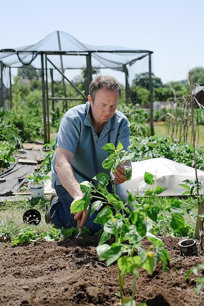 Planting Tomatillo Green Physallis