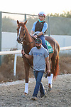 March 25, 2021: Dubai Sheema Classic Contender Channel Maker trains on the track for trainer Bill Mott at Meydan Racecourse, Dubai, UAE.<br />