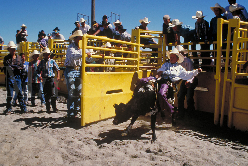 JUNIOR BULL RIDING EVENT CROW RODEO IN MONTANA. JUNIOR RODEO BULLRIDER. CROW AGENCY MONTANA USA.