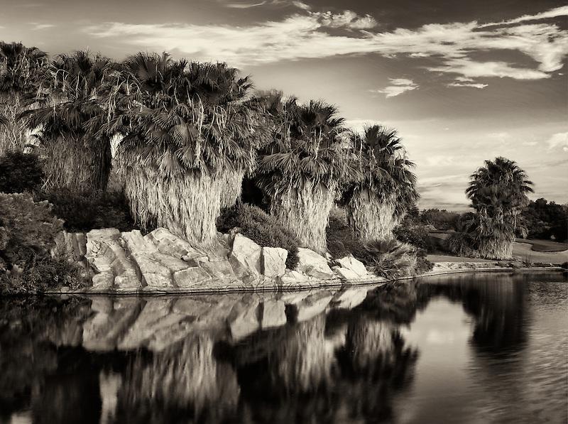 Pond and palm tress at sunrise Desert Willow Golf Resort. Palm Desert, California