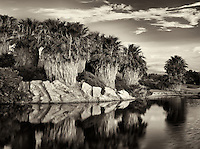 Pond and palm tress at sunrise Desert Willow Golf Resort. Palm Desert, California