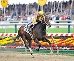 09 May 16: Calvin Borel rides filly Rachel Alexandra to victory in the 134th running of the grade 1 Preakness Stakes for three year olds at Pimlico Race Track in Baltimore, Maryland.