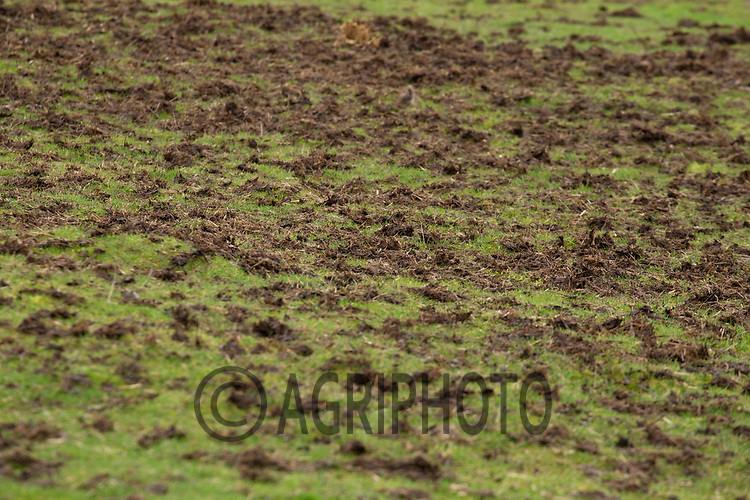 16-2-2021 Farmyard manure spread on grassland <br /> ©Tim Scrivener Photographer 07850 303986<br />      ....Covering Agriculture In The UK....