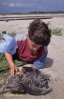 1Y47-324x  Horseshoe Crab - boy examining horseshoe crab -  Limulus polyphemus