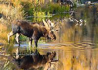 1810 Autumn Reflection