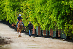 BALTIMORE , MD - MAY 16:  Good Magic heads to the track to complete preparations for the Preakness Stakes at Pimlico Racecourse on May 16, 2018 in Baltimore, Maryland. (Photo by Alex Evers/Eclipse Sportswire/Getty Images)