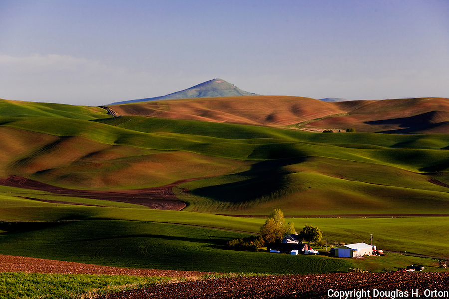 Early morning in the Palouse Hills graces a family farm with soft light.  Palouse Country, in Washington, known as the heart of wheat farming in the United States is also famous for its rolling scenery.  This landscape is from Kamiak Butte, a Whitman County Park offering camping, picknicking, hiking, and incredible views of both Idaho and Washington Palouse country.  Steptoe Butte, a Washington State Park, is in the background.