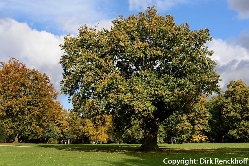 Herbstfärbung der Laubbäume Jenischpark in Groß-Flottbek, Hamburg, Deutschland<br /> Indian summer in Jenischpark, Groß-Flottbek, Hamburg, Germany