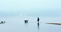 Walking dog at low tide, Cape Cod, Massachusetts, USA.