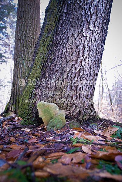 Leaf shaped rocks leaning against tree trunk