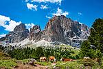 Italien, Suedtirol (Trentino - Alto Adige), oberhalb von Wolkenstein in Groeden: Kuehe auf einer Almwiese vom Langkofel an der Sella-Joch-Passstrasse | Italy, South Tyrol (Trentino - Alto Adige), Dolomites, near Selva di Val Gardena: cows grazing on alpine pastures with Sasso Lungo mountain near Sella Pass Road
