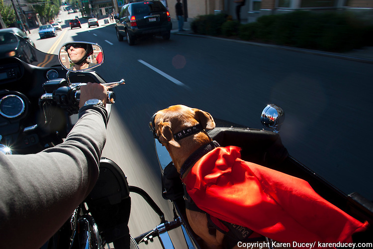 Brande Schweitzer rides a motorcycle with her dog, Lucy, in the sidecar,in Seattle, Washington.