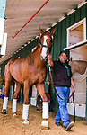 BALTIMORE, MD - MAY 16:  Justify with assistant trainer Jimmy Barnes at Pimlico Racecourse on May 16, 2018 in Baltimore, Maryland. (Photo by Alex Evers/Eclipse Sportswire/Getty Images)