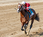 Copper Bullet (no. 9) wins the Saratoga Special (Grade 2) for two year olds on  August 13 at Saratoga Race Course, Saratoga Springs, NY.  The winner, ridden by Irad Ortiz and trained by Steven Asmussen, drew away to win by 4 lengths the 6 1/2 furlong race against 8 opponents.  (Bruce Dudek/Eclipse Sportswire)