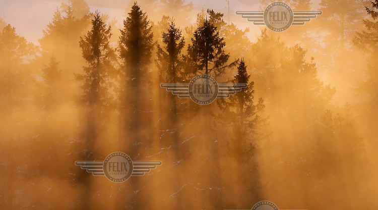 Trees shrouded in clouds and the light from the sunset near Holmenkollen. .  (Photo:Fredrik Naumann/Felix Fetures.)