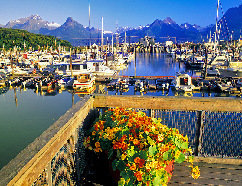 Valdez Harbor with potted Nasturtium (sp. tropoeolum). Valdez, Alaska