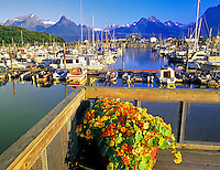 Valdez Harbor with potted Nasturtium (sp. tropoeolum). Valdez, Alaska