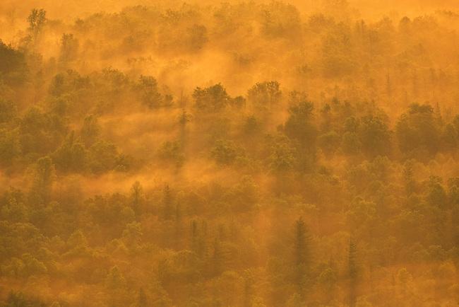 Fog, sunrise light and forest shadows, Blue Ridge Parkway