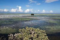 Wattlandschaft zwischen Cayo Coco und Cayo Guillermo, Archipielago de Camagüey, Provinz Ciego de Avila, Cuba