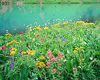 Lush wildflowers along the shore of Blue Lake, near Telluride, Colorado