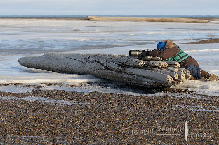 Photographers visiting to photograph the bears contribute to the local economy. Every fall, polar bears gather near the community of Kaktovik, Alaska, on the northern edge of ANWR, waiting for the Arctic Ocean to freeze. The bears have become a symbol of global warming.