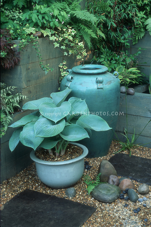 Blue hosta in matching blue pot & urn in shady spot with ferns in secret garden