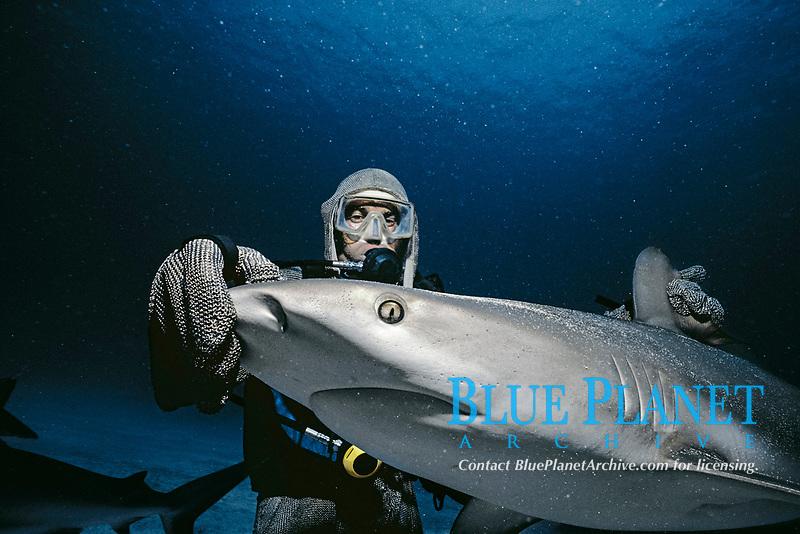 Shark hander holding Caribbean Reef Shark (Carcharhinus perezii) in trance, Bahamas - Caribbean Sea.