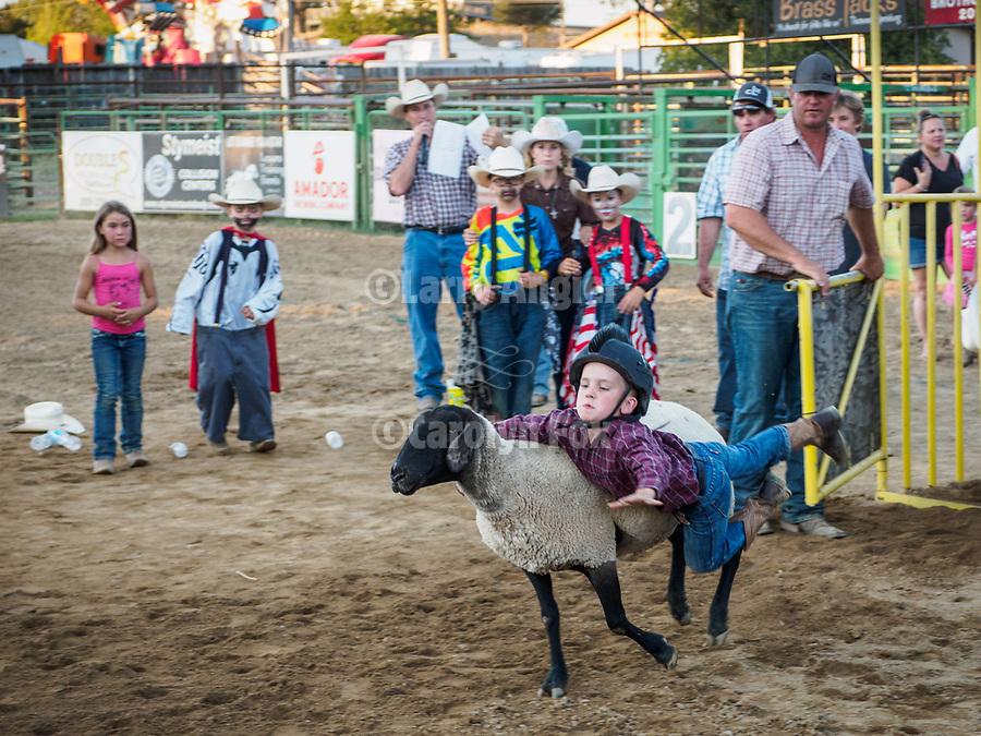 Mutton Bustin' at the 79th Amador County Fair, Plymouth, Calif.<br /> <br /> <br /> #AmadorCountyFair, #PlymouthCalifornia,<br /> #TourAmador, #VisitAmador,