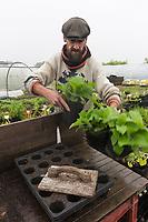 France, Indre-et-Loire (37), Chédigny, maraîcher bio, Xavier Mathias- Préparation des boutures  // France, Indre et Loire, Chedigny, organic gardener, Xavier Mathias- Auto N: 2013-125